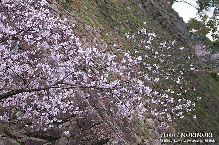 宮崎の桜の名所 城山公園