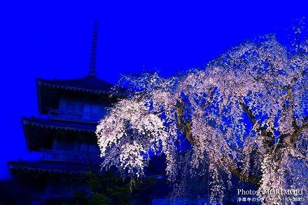 宮崎の桜の名所 五ヶ瀬町 浄専寺のシダレザクラ