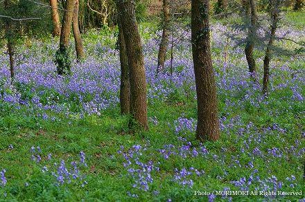 綾町 林の中の花