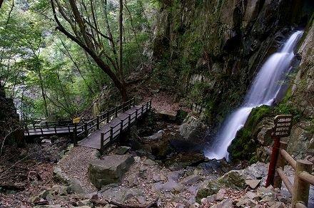 綾照葉樹林地帯の遊歩道