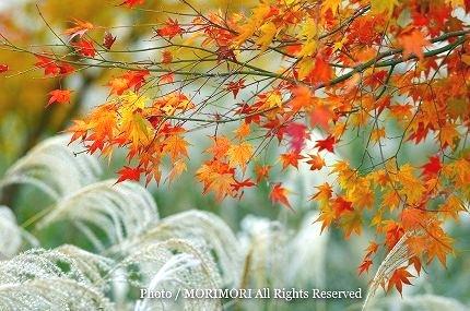 えびの高原 紅葉とススキ