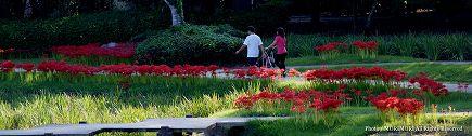 宮崎市市民の森の彼岸花