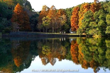 平和台公園(宮崎市)の紅葉 01